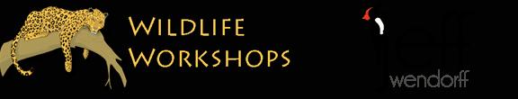 Jeff Wendorff Wildlife Workshops Logos